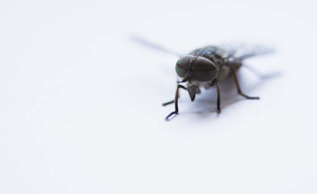 pest control raleigh nc
