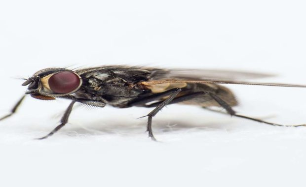 pest control fresno bug