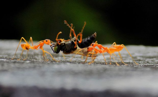 pest control raleigh nc ants